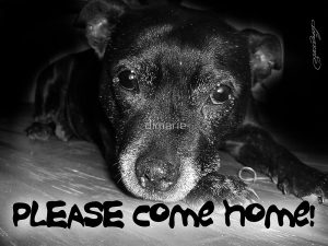 please-come-home