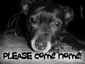please-come-home