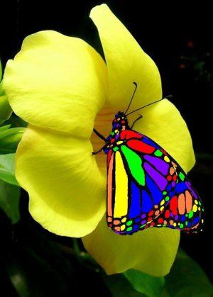 Yellow-flower-butterfly