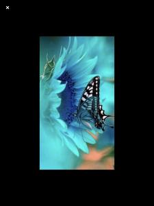 Blue-flower-blue-butterfly