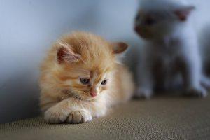 cat-3266671__340.jpg