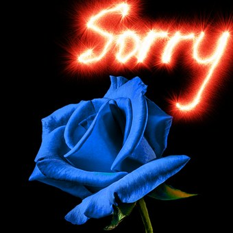rose-sorry-1327160__340.jpg