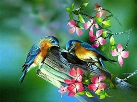 two-blue-birds.jpg