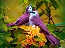 two-purple-birds.jpg