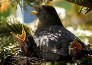bird-and-babies.jpg