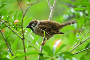 bird-nature-3354329__340