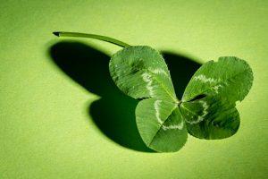 clover-941597__340.jpg