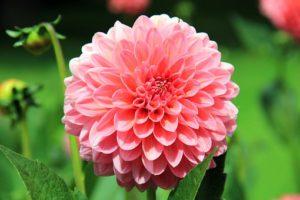 flower-197343__340