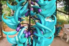 flowers-Jade-Vine-02